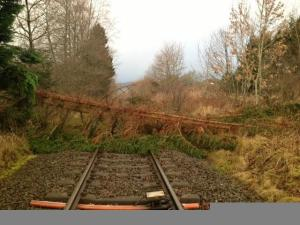 tree on line south of moulinearn level crossing networkrailscot